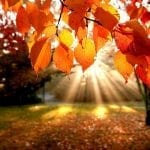 Everyone Loves Autumn And Here's Why