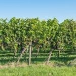 Cava Winery and Vineyard's 3rd Annual Wine & Wings Festival