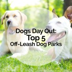 Dogs Day Out: Top 5 Off-Leash Dog Parks