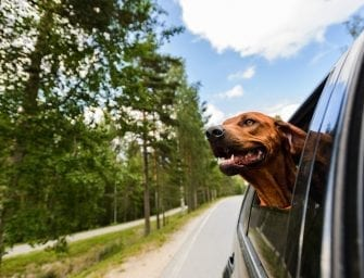 The Perfect Fall Road Trip with Your Dog