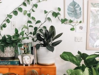 The Best Houseplants for Beginners