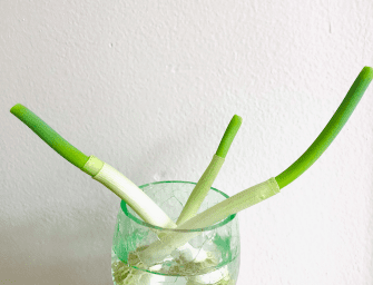 How to Regrow Vegetables With Scraps