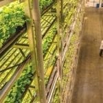 This Jersey City Vertical Farming Initiative Will Transform NJ Agriculture