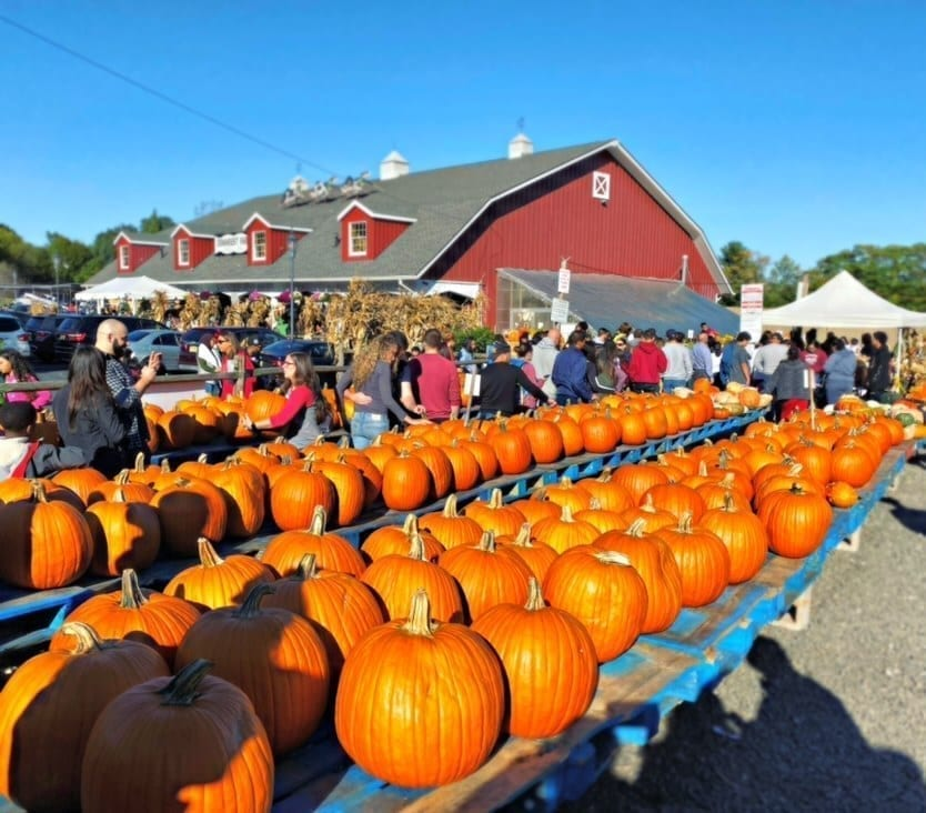 Farms to Visit for Pumpkin Picking in New Jersey 2020