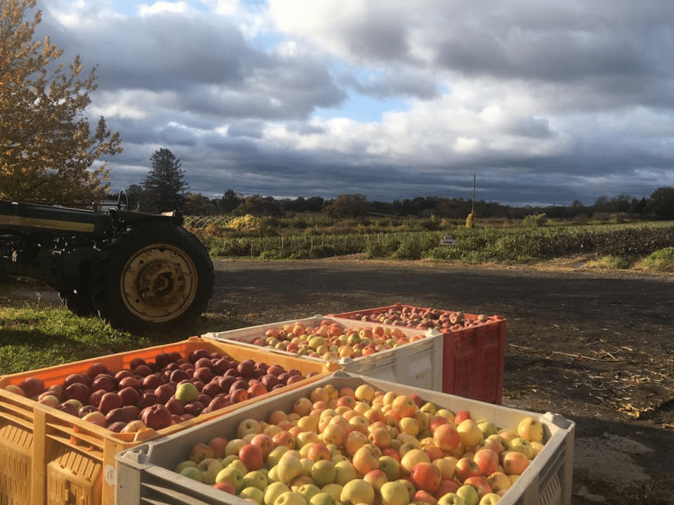 where to go apple picking in new jersey