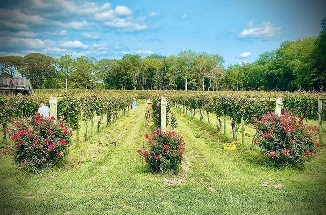 best new jersey wineries