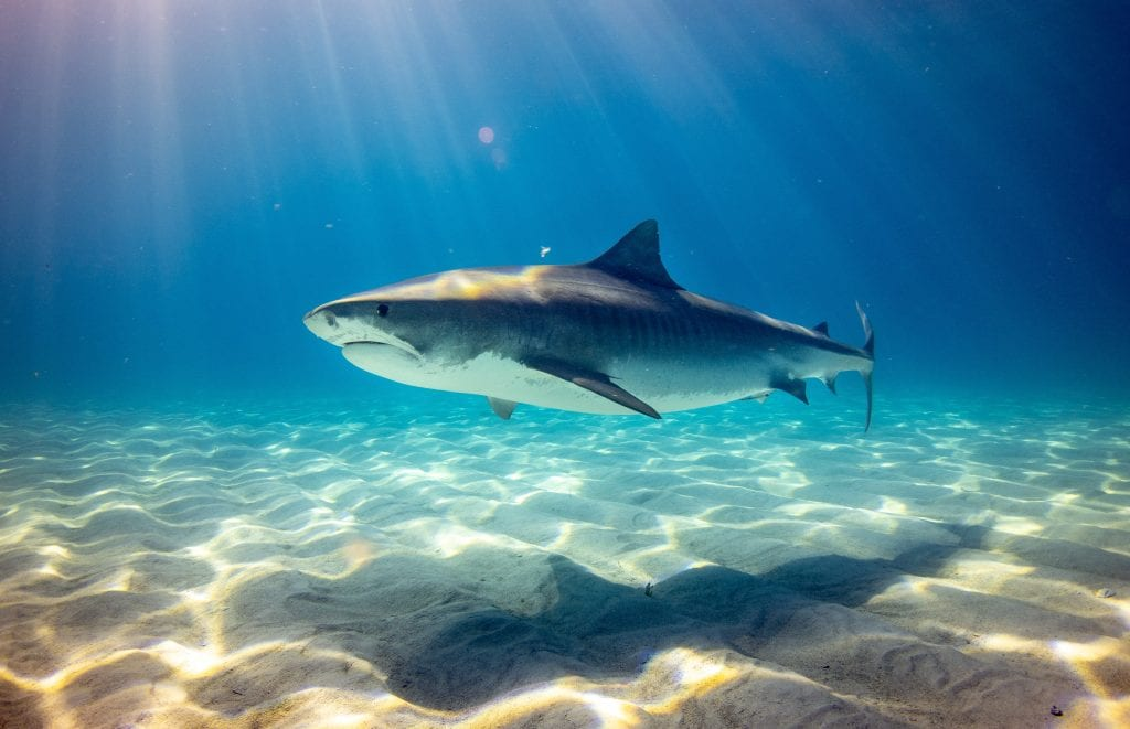 Are There Sharks in New Jersey?